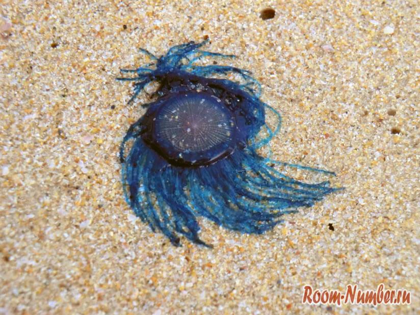 Karon-Beach-00011