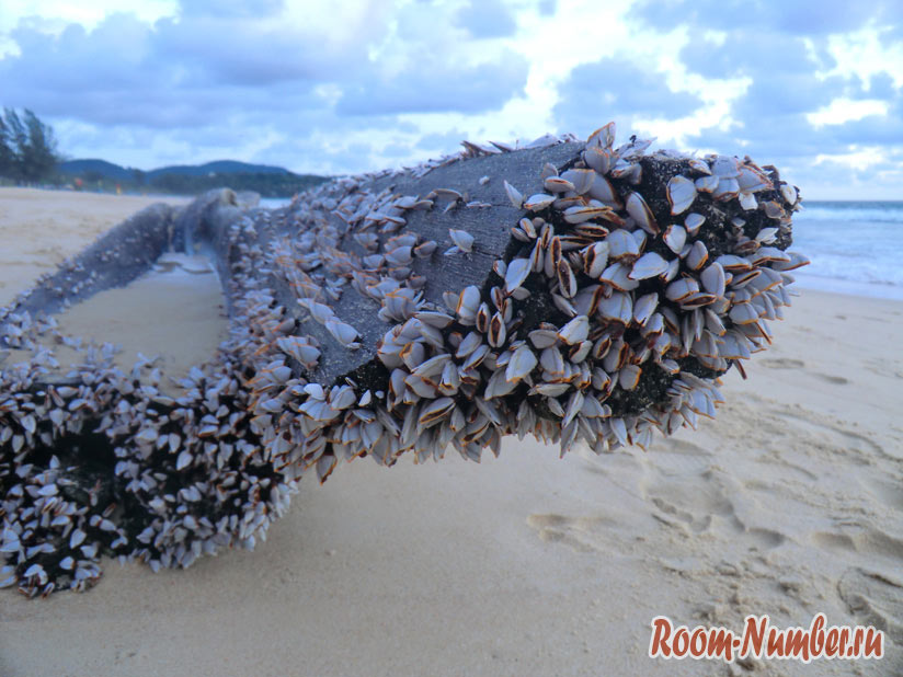 Karon-Beach-0009
