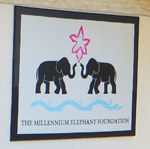Millennium Elephant Foundation