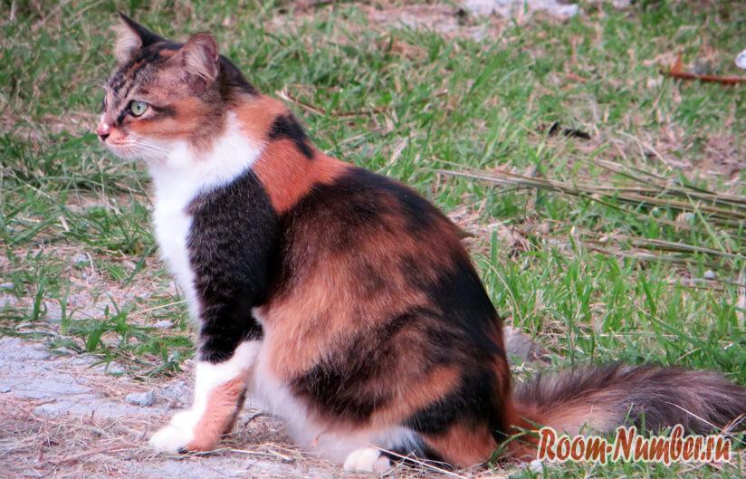 Кошки на Лангкави