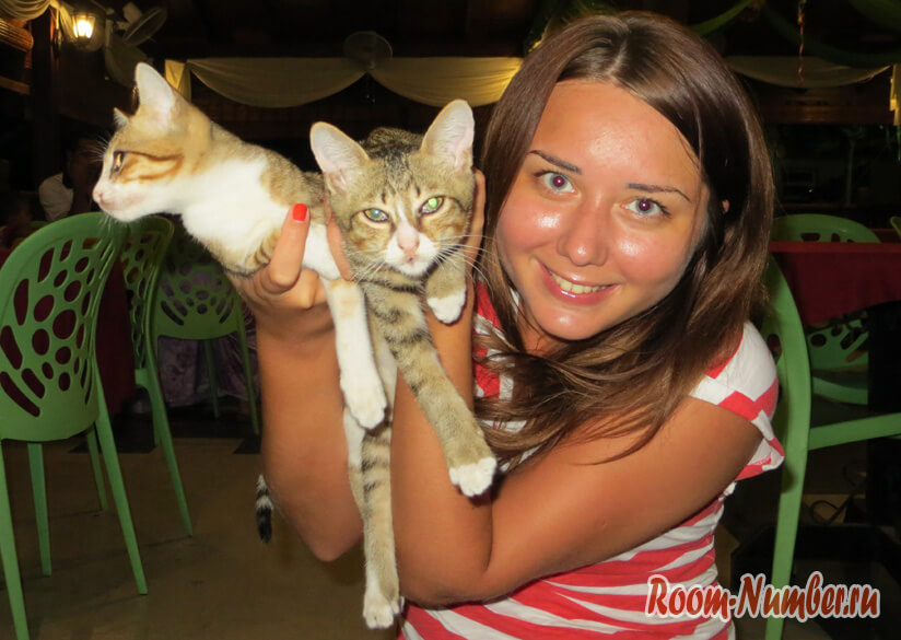 Котята на руках