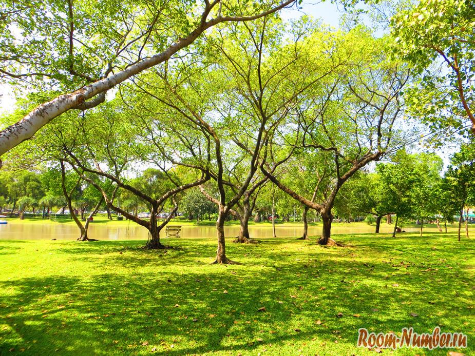 зеленая трава и деревья