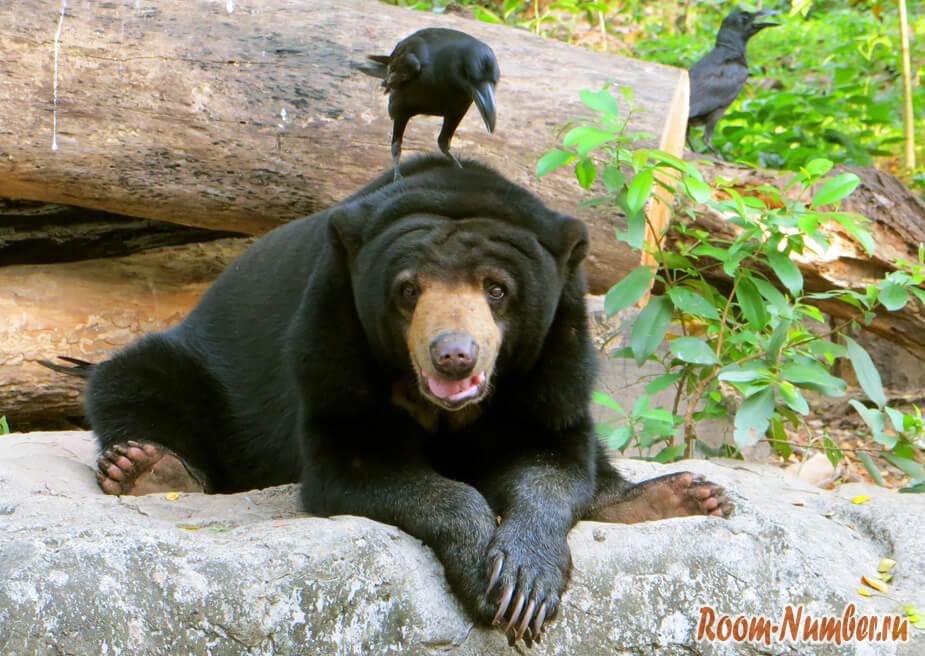 медведь и ворона