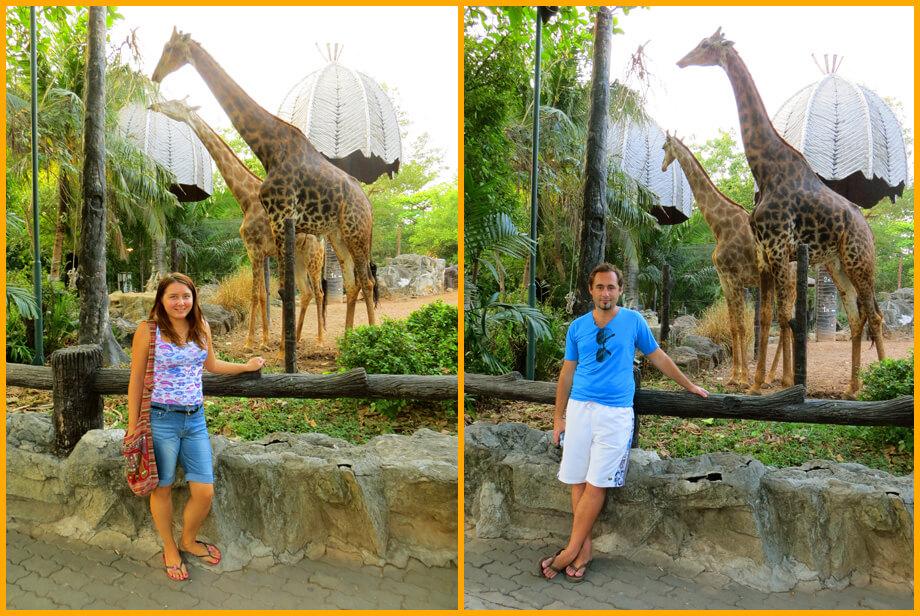фото с жирафом