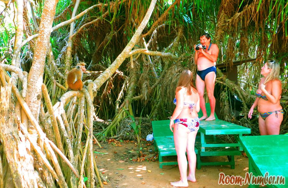 мартышка и туристы