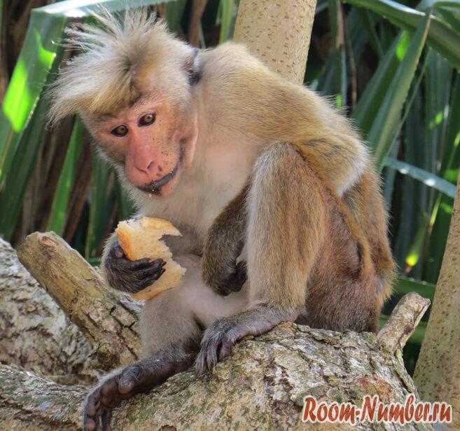 обезьяна на дереве