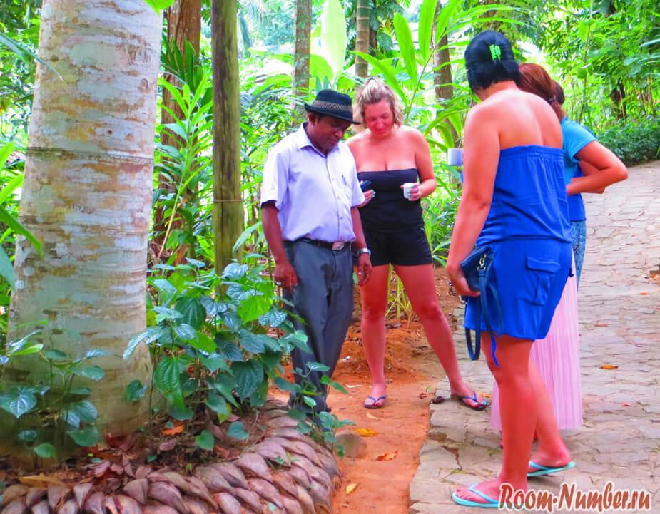 Сад специй в Шри Ланке — очередной развод на деньги