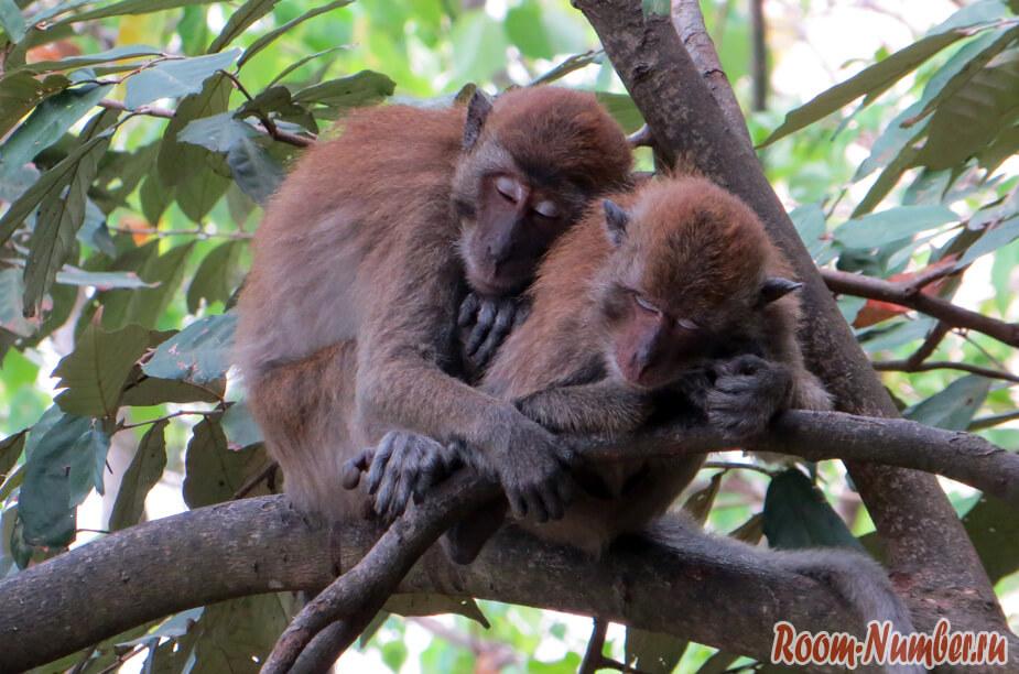 обезьяны спят