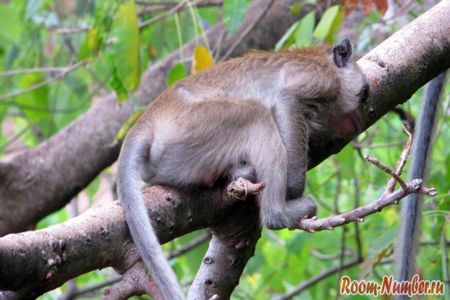 Как спят обезьяны в джунглях