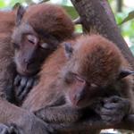 monkeys-0038