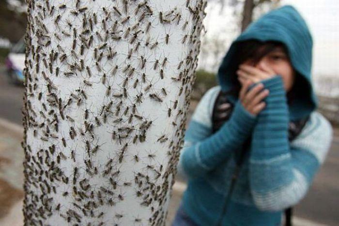 Сегодня в Краби нашествие насекомых! Стрекочащие букашки лезут под дверь