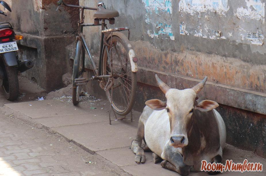 корова и велосипед