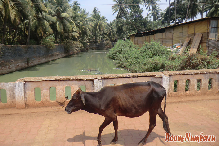 Гокарна, Индия — самобытный городок в штате Карнатака и пляж Ом