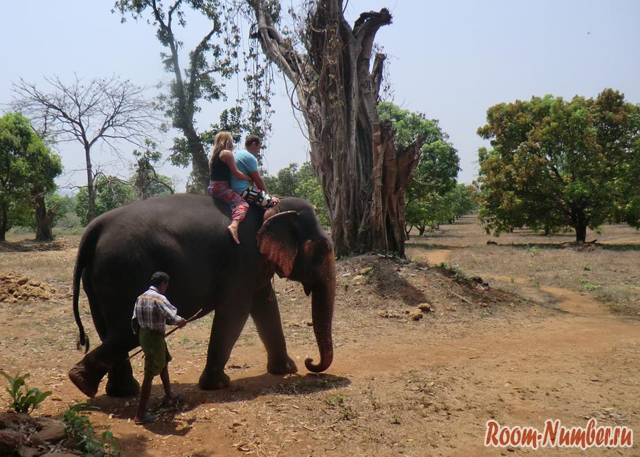 кататься на слоне
