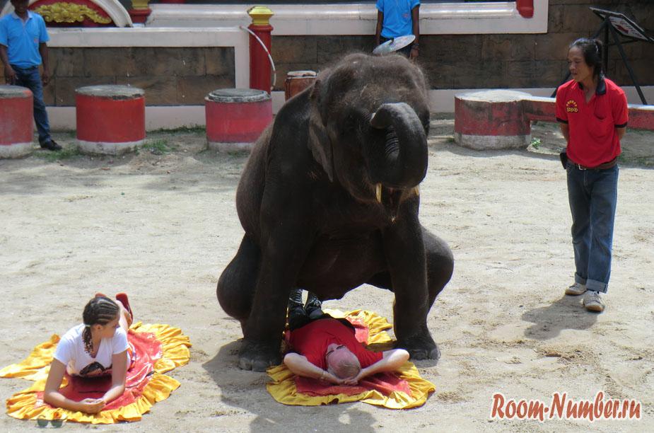 zoopark-na-pxykete-pxyket-zy-15