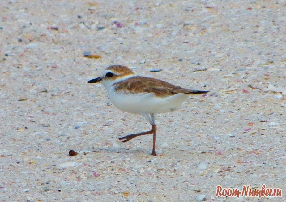 Птичка на песке
