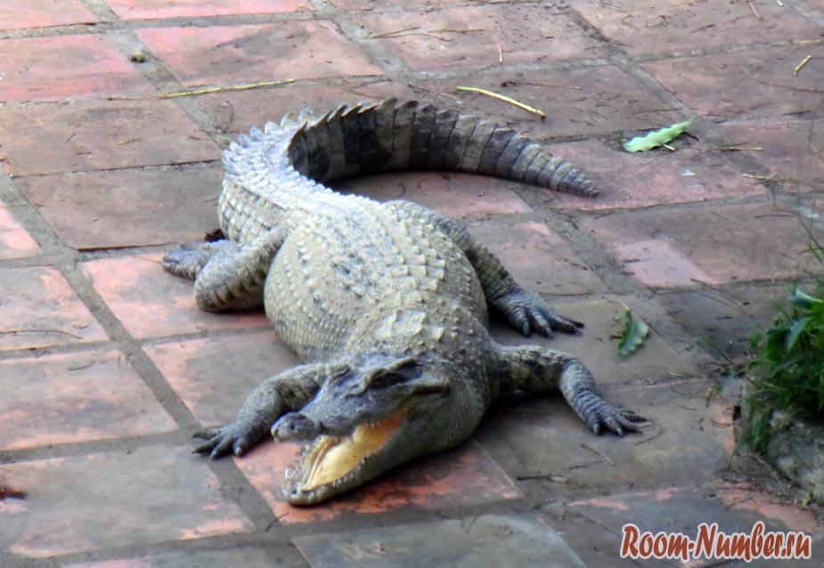 krokodile-farm-003