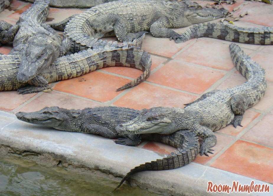 крокодилы спят