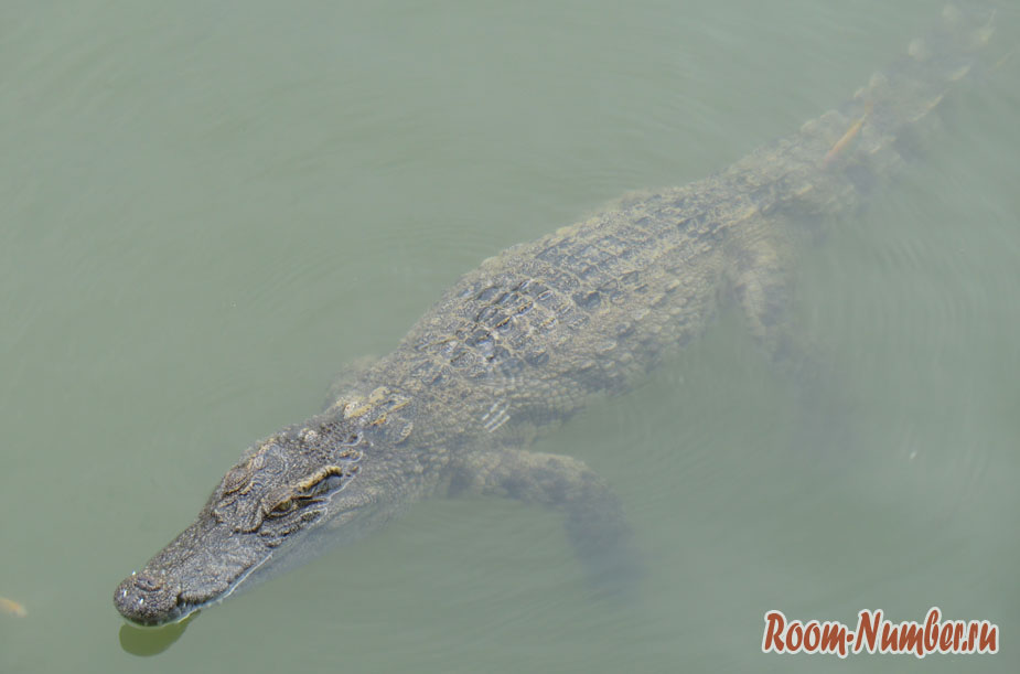 krokodilova-ferma-vo-vietname-3