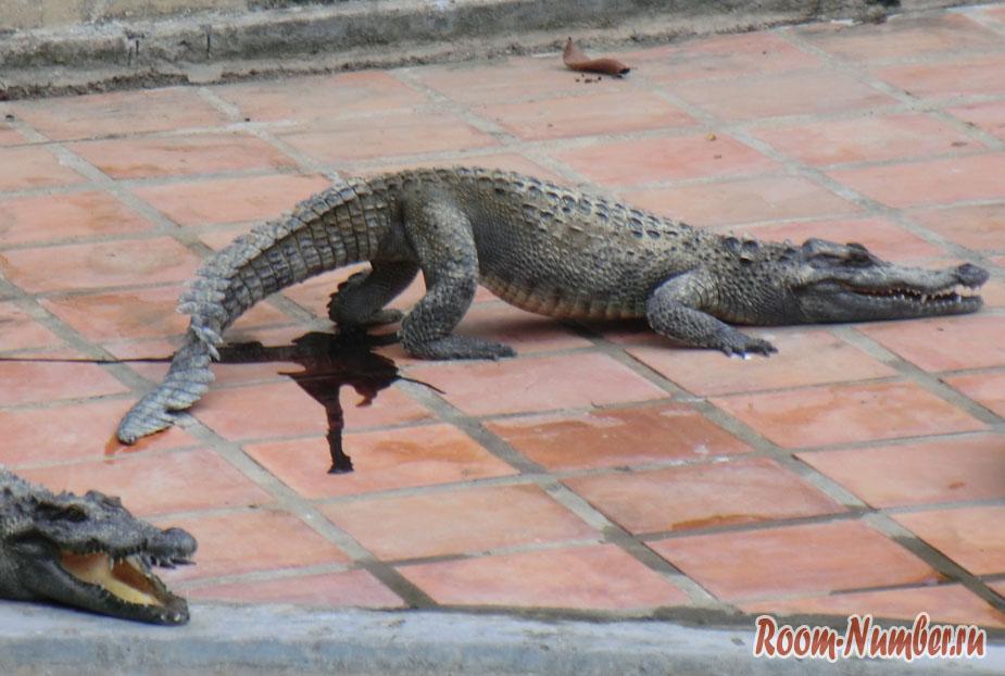 krokodilova-ferma-vo-vietname-4