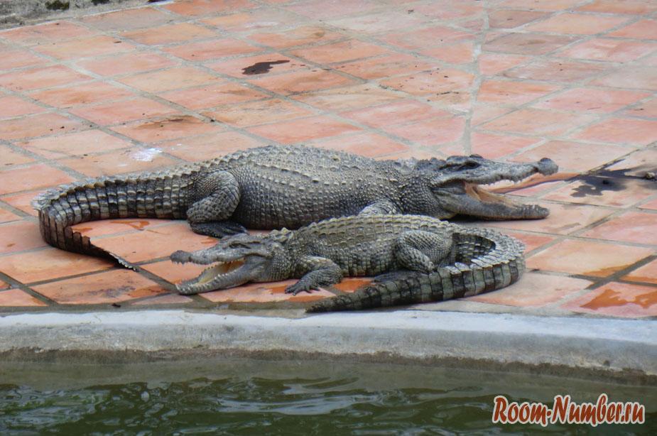 krokodilova-ferma-vo-vietname-5