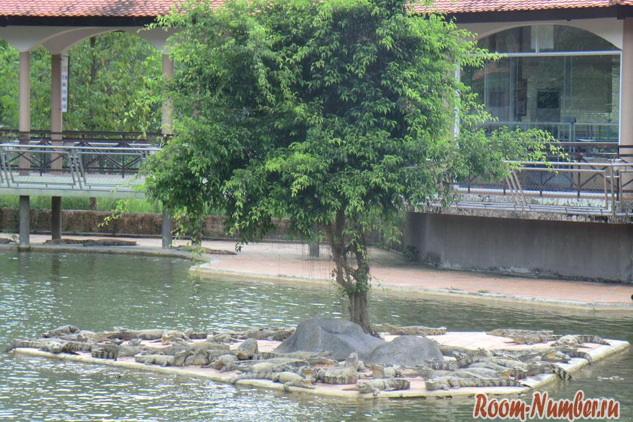 krokodilova-ferma-vo-vietname-6