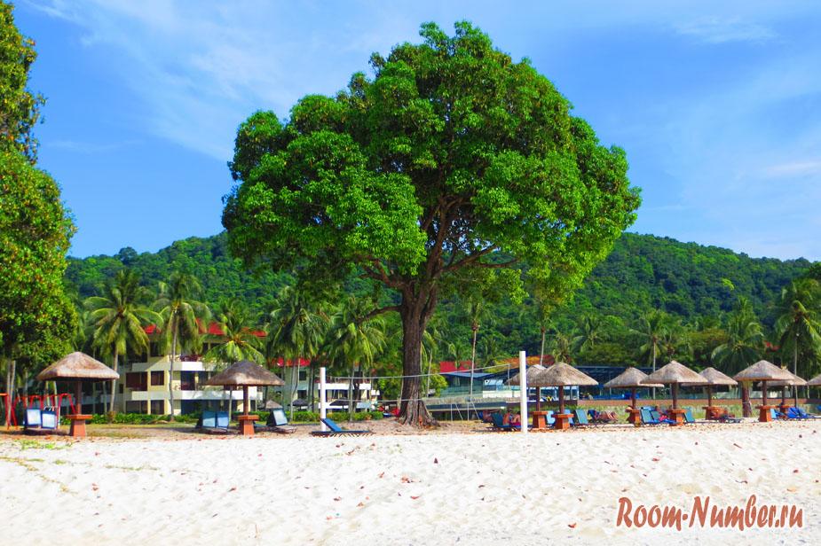 Дерево на пляже Pantai Tengah