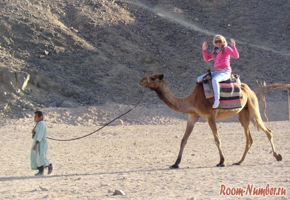 Катя на верблюде в Египте