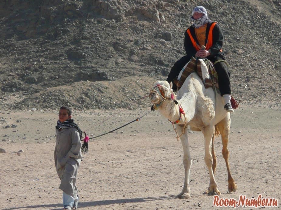 Слава на верблюде