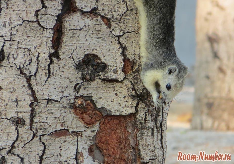 белки на деревьях