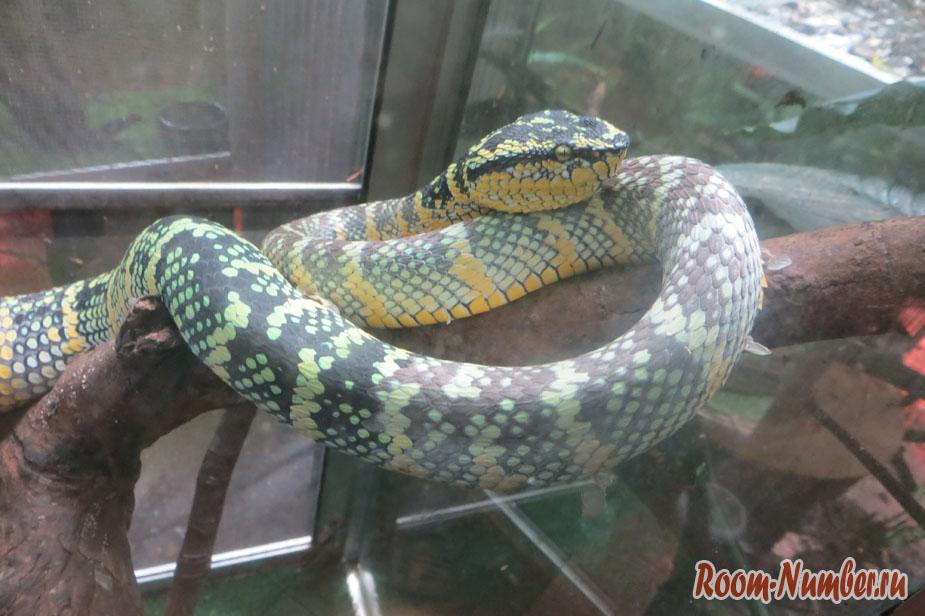 Snake house sianukvil
