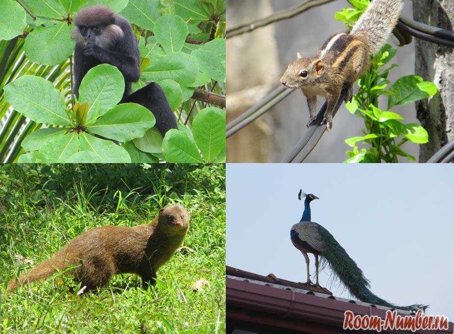 животные в шри ланке