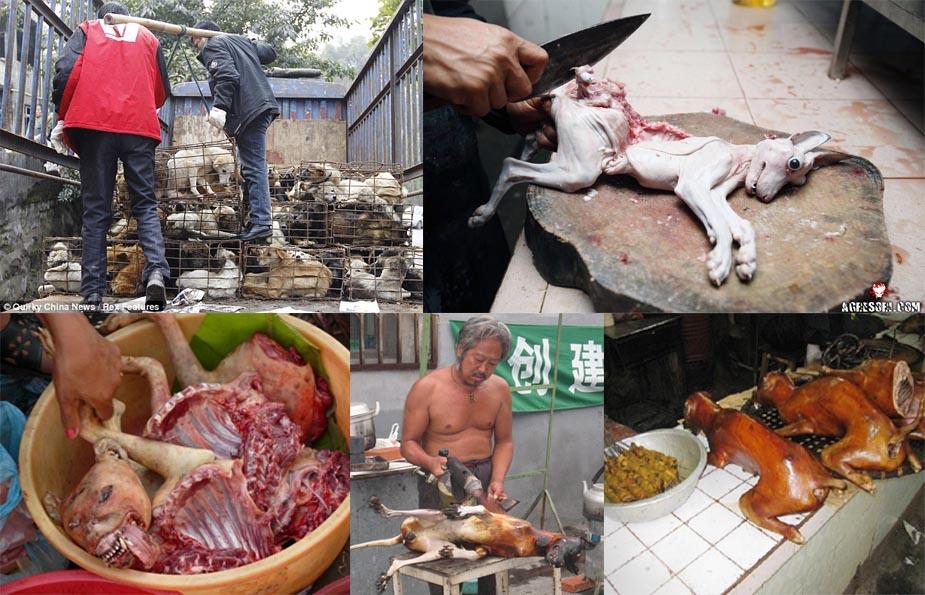 вьетнамцы едят собак