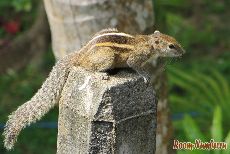 Животный мир Шри-Ланки. Животные, которых мы видели на острове в естественной среде обитания