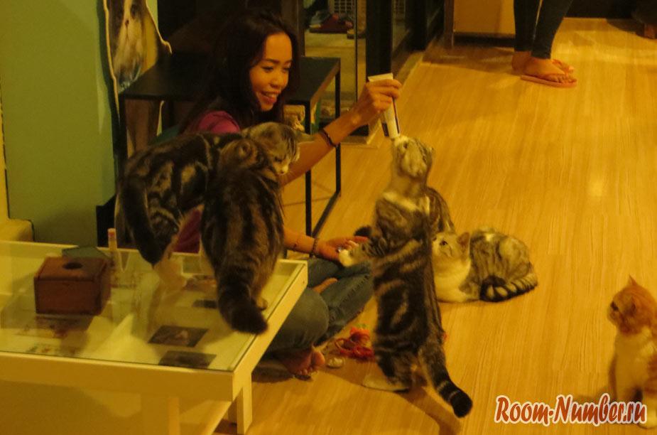 cat-cafe-24