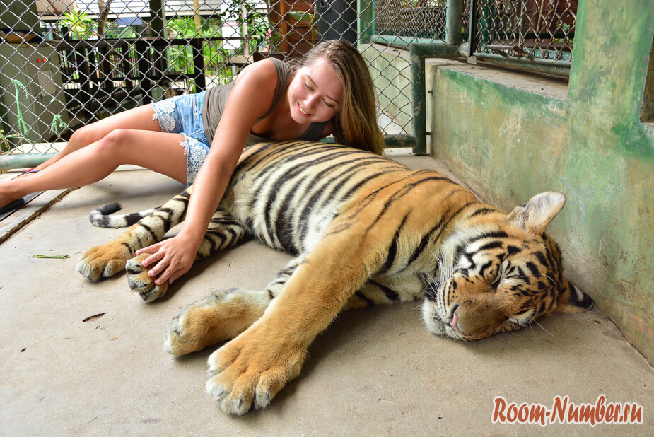 korolevstvo-tigrov-na-phukete-11