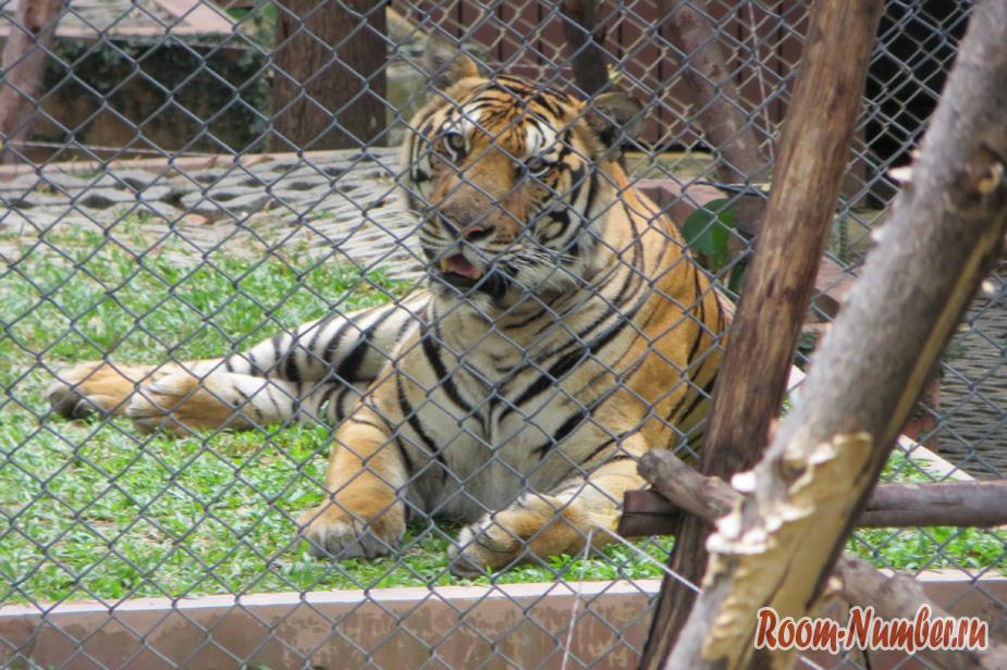 korolevstvo-tigrov-na-phukete-13