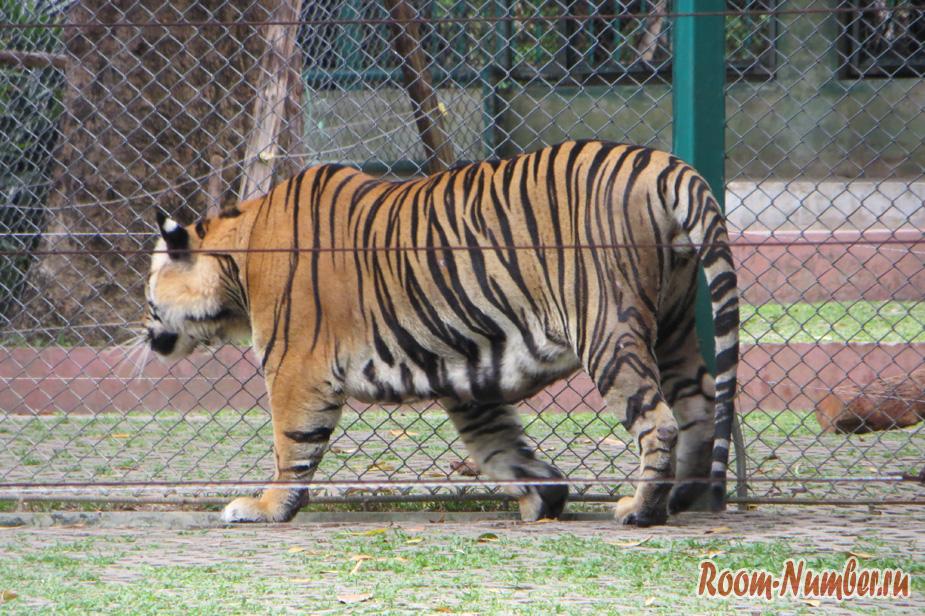 korolevstvo-tigrov-na-phukete-14