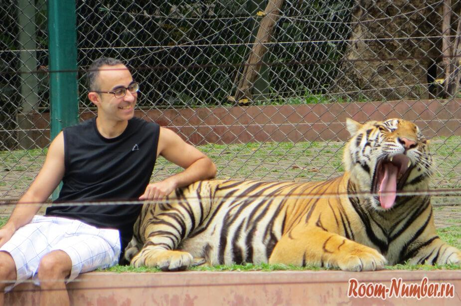 korolevstvo-tigrov-na-phukete-17