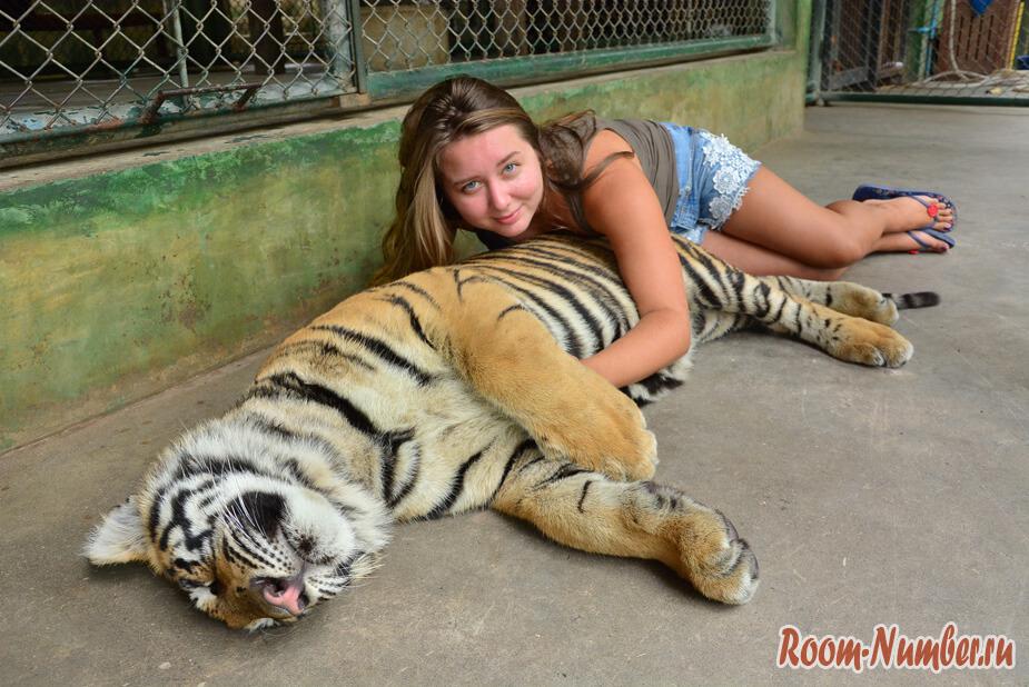 korolevstvo-tigrov-na-phukete-3