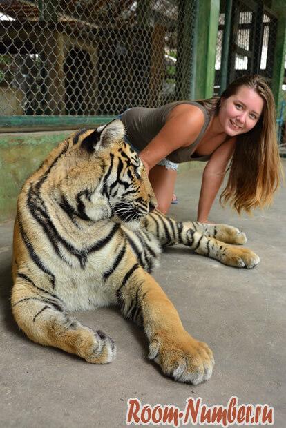 korolevstvo-tigrov-na-phukete-5