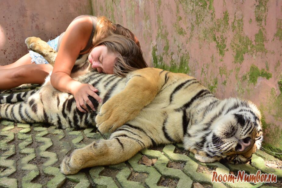korolevstvo-tigrov-na-phukete-7