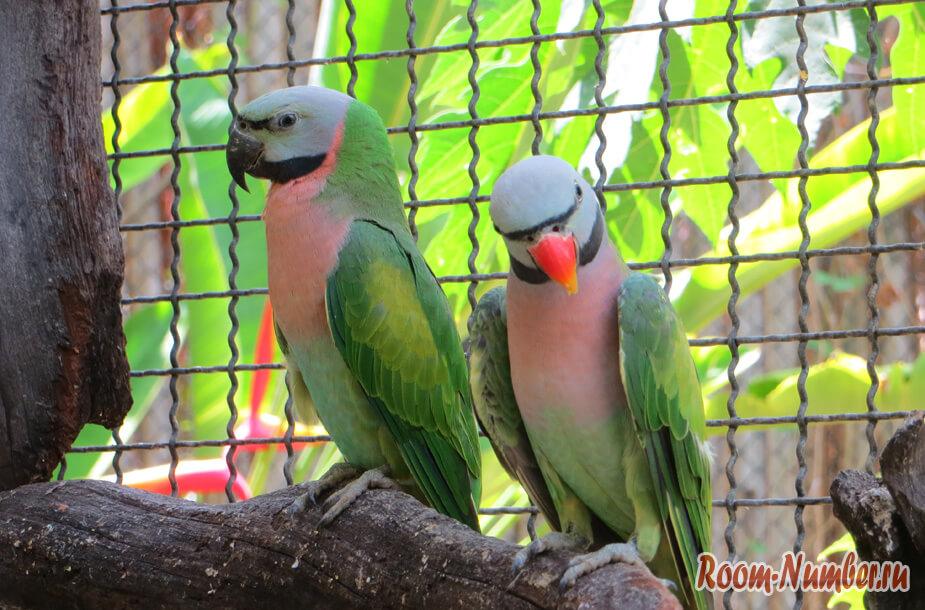 park-ptis-na-phukete-14