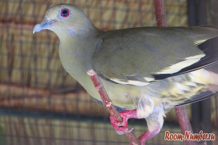 park-ptis-na-phukete-22