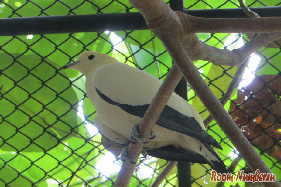 park-ptis-na-phukete-23