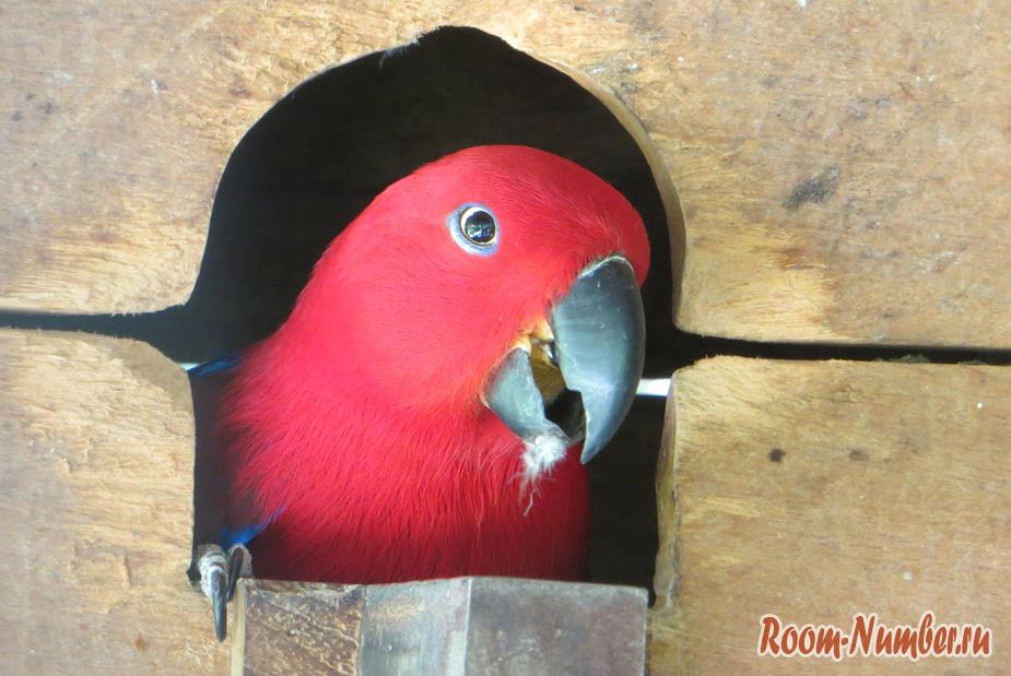 park-ptis-na-phukete-8
