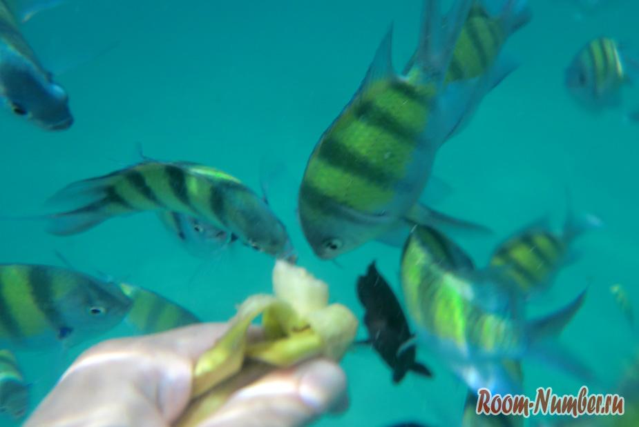 podvodnye-motosikly-na-phykete-8