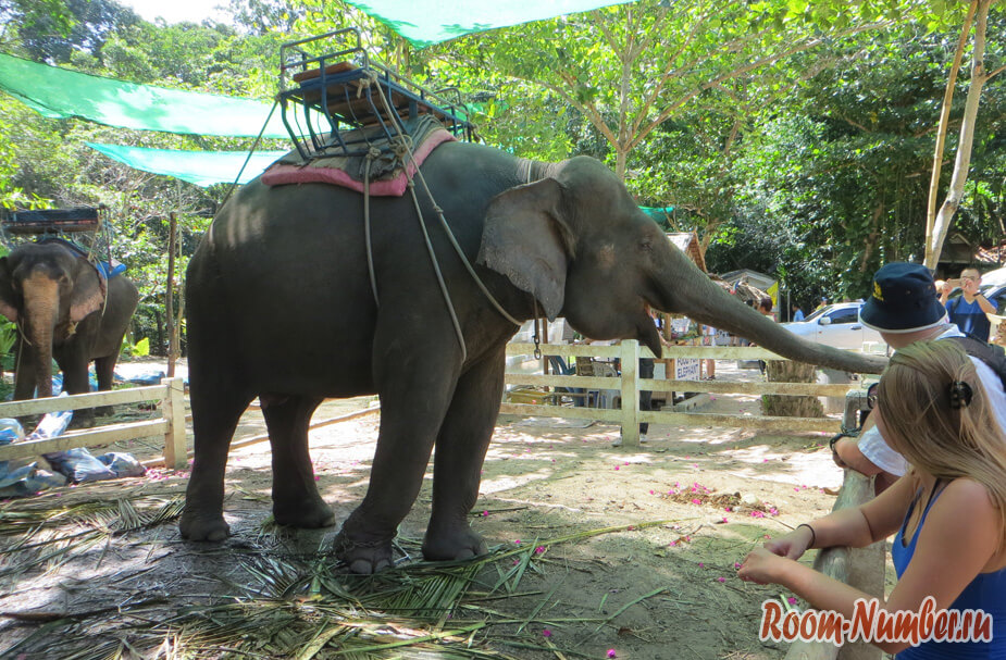 slonovia-ferma-na-samui-1