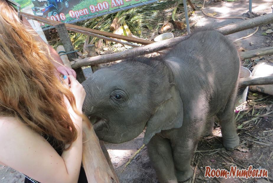 slonovia-ferma-na-samui-2