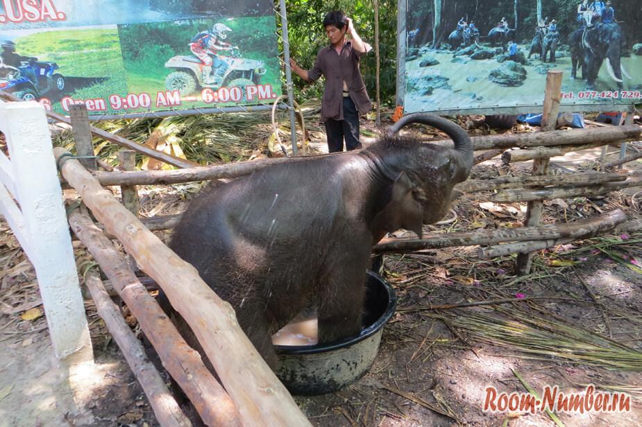 slonovia-ferma-na-samui-5